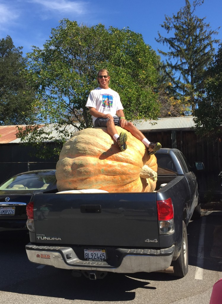Mr. Carlson sitting on top of his 1637 lb. pumpkin!