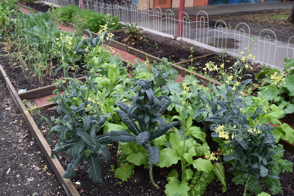 Bishop garden